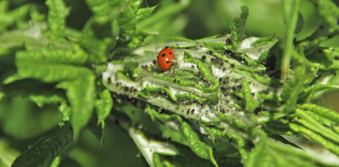 manage garden pests